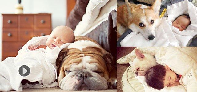 宝宝睡觉哭闹 狗狗化身贴心小棉袄盖被子