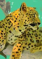 动物小说非洲系列·豹的世仇