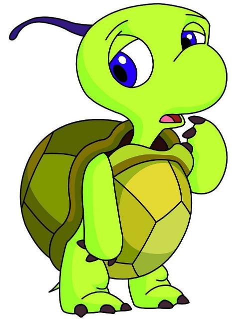 我家的乌龟 黄黄