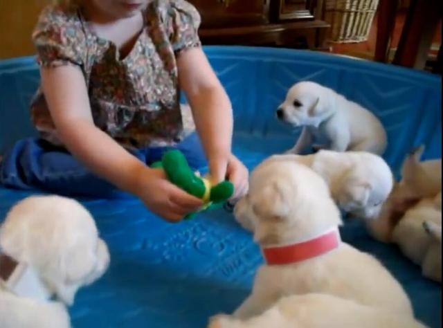 小女孩与一整窝小狗狗玩耍!狗狗母亲在一旁监督