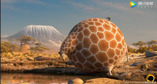 六开彩资料六肖中特:圆滚滚的动物世界-长颈鹿篇