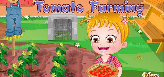 可爱宝贝种植番茄