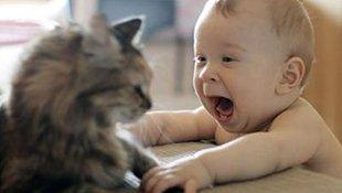 可爱的猫,狗爱宝宝。