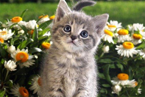 猫吃东西卡通图片