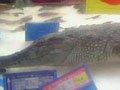 成都超市惊现鳄鱼,你怎么看?