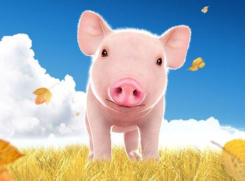 整蛊专家一只小猪