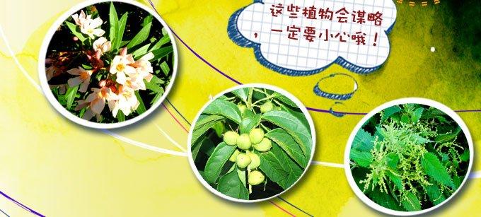 全副武装的植物