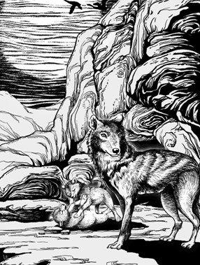 再续《狼王梦》经典