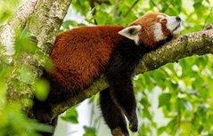 组图:世界睡眠日 动物睡姿萌化人心