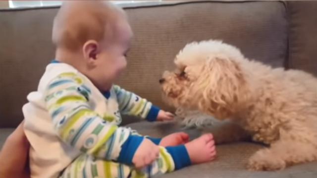 宝宝们竟然可以用笑声征服萌宠!