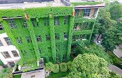 组图:大学图书馆长满爬山虎似绿色城堡