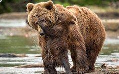"""""""熊孩子""""紧抱妈妈撒娇 画面温馨有爱"""