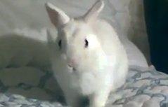 这样的兔子一定没见过~
