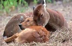 好暖心 动物们跨界间的友谊