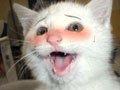 组图:爆笑!百变猫咪的给力表情