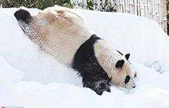 """冻得都傻了!小动物年底喜提""""头皮雪"""""""