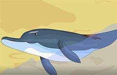 方向之王—海豚