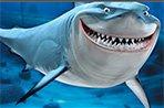 大鲨鱼拼图