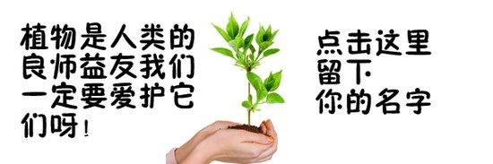 给人智慧的精灵-植物