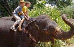 少年蹬大象鼻子上脸 史上最牛的跑酷没有之一