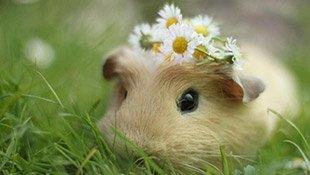 仓鼠仓鼠仓鼠,这次是可爱的仓鼠