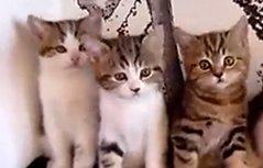 一群小猫的集体舞 萌化了众网友