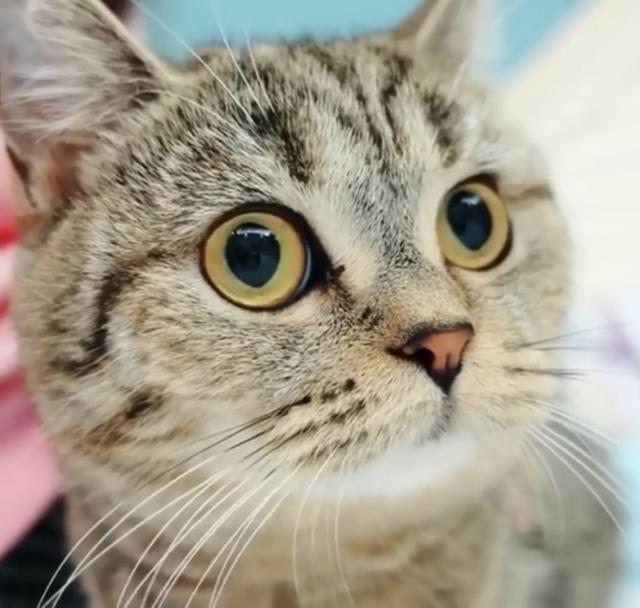 小奶猫的杀伤力究竟有多足?