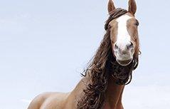 二月二理发去旧 晒晒小动物们的^洗剪吹 ̄发型