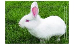 兔子眼睛颜色的奥秘