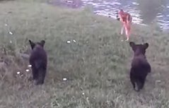 小鹿与小熊 开心好朋友