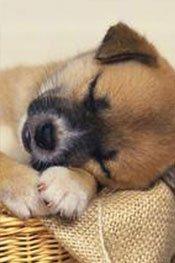 超可爱的瞌睡狗狗