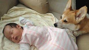 主人发现汪星人每天半夜都溜进婴儿房,调阅监视器画面才发现...