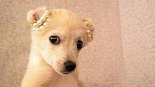 都说狗是最聪明的动物,到了哈士奇这画风突变!
