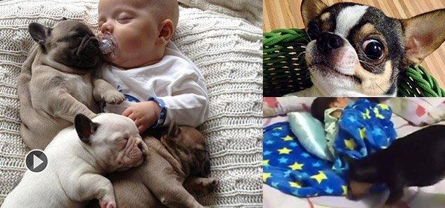 宝宝睡觉踢被子 狗狗赶紧帮他盖好