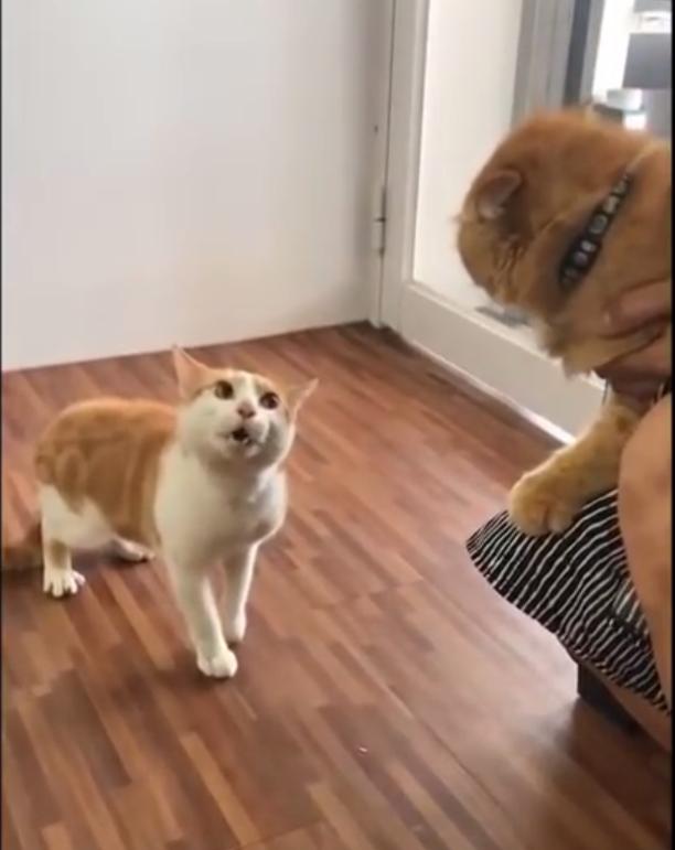 遇上这样的主人...猫:求放过!