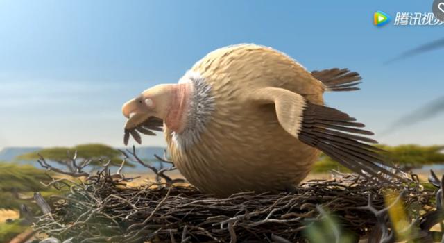 圆滚滚的动物世界-秃鹰篇
