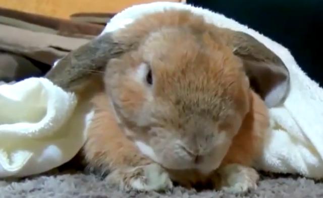 这样的兔子一定没见过,会撒娇会卖萌,还会求抱抱~