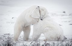 晒晒小动物们的雪地萌照 撒欢耍宝敲可爱
