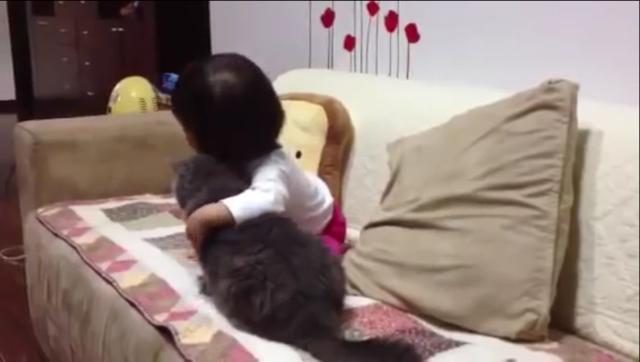 互相撒娇的猫咪和小孩