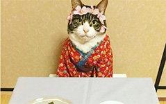 组图:日猫咪喜欢Cos角色 美食当前坐怀不乱