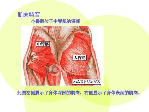内裤臀部减肥法练就小翘臀塑身衣连肌肉吗图片