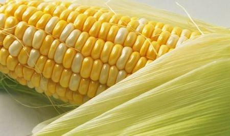看玉米演绎另类丰胸新法