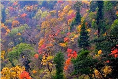 立冬过后,乐山这些地方已经美得不像话