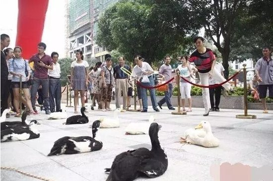 9月24、25日,塞纳豪庭喊你捉鸡套鹅、生捉大鱼!