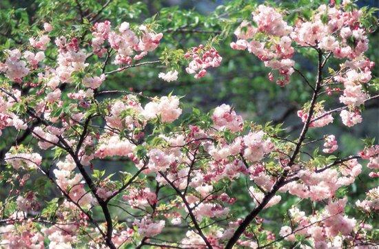 乍暖还寒 春暖花开 为什么不趁着好天气出去转转呢