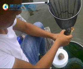 凤凰水城私家湖全民垂钓季正式开启!
