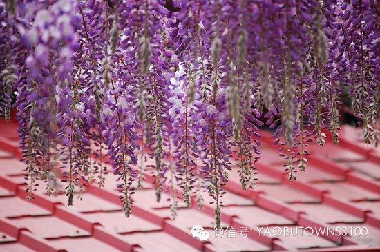 全国首个紫藤花主题商业街区落址窑埠town