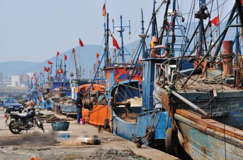 休渔保护效应显现 多年未见的鲅鱼回来了