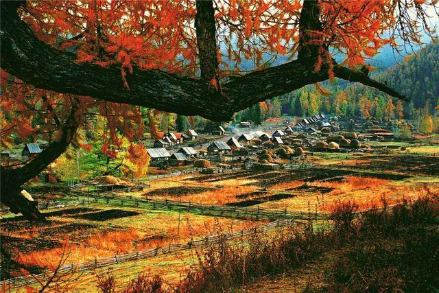 当秋季一来临,整个村落,此刻被秋色灿烂的群山,温柔地拥抱在怀里。白哈巴村最美丽的季节是秋季,金秋时节,这里层林尽染,一下子就变得色彩斑斓起来了!山村是五彩的红、黄、绿、褐色,层林尽染,犹如一块调色板,加之映衬阿勒泰山的皑皑雪峰,一年四季都是一幅完美的油画。