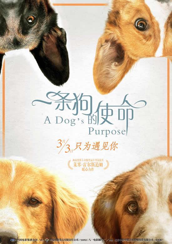 """《一条狗的使命》被赞""""必看必爱必哭"""" 定档3月3日"""